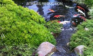 Meditation on Thursdays, in Burlington @ Chrysalis Yoga | Burlington | Ontario | Canada